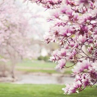 Spring e1586019975213
